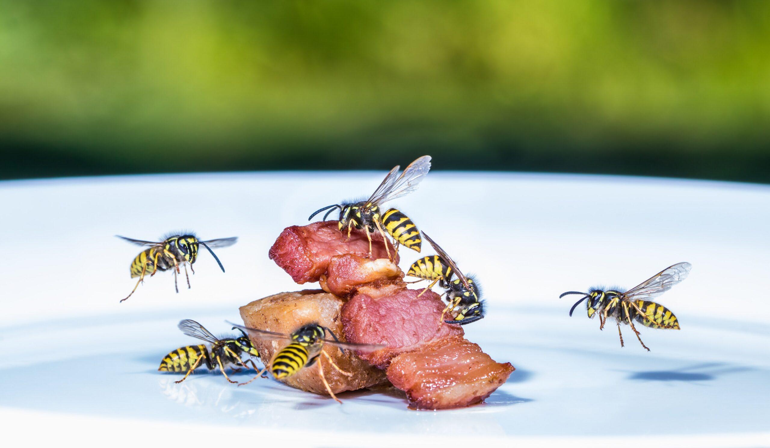 Wespen abwehren: Verhaltenstipps und Abwehrmethoden ...