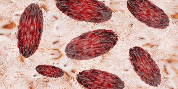 Eine grafische Darstellung von Brucella-Bakterien.
