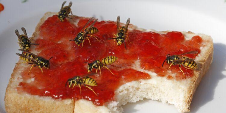 Wespen auf einem Marmeladentoast