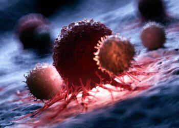 Eine grafische Darstellung von weißen Blutkörperchen, die eine Krebszelle angreifen.