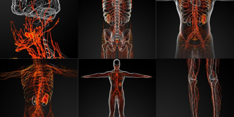 Eine grafische Darstellung des Lymphsystems in einem männlichen Körper.
