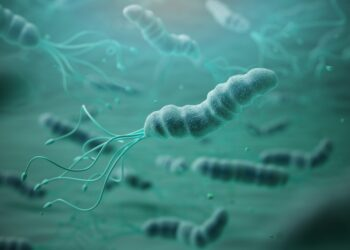 Das Bakterium Helicobacter pylori.