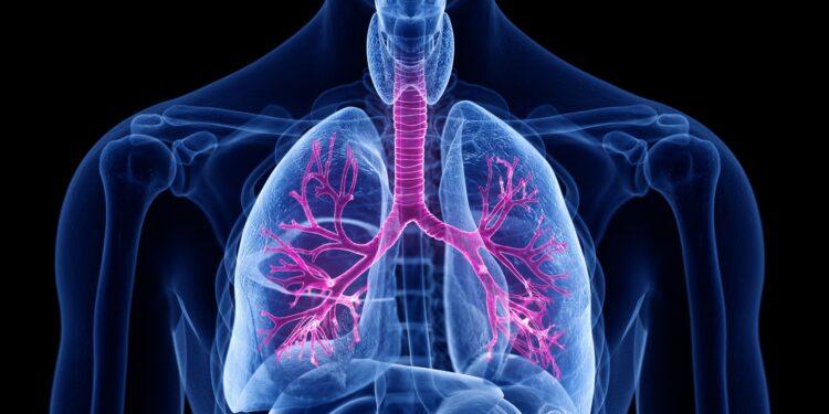 Eine grafische Darstellung der Lungenflügel eines Menschen.