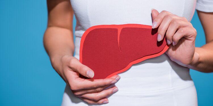 Frau hält Papier in Form einer Leber vor ihrem Bauch