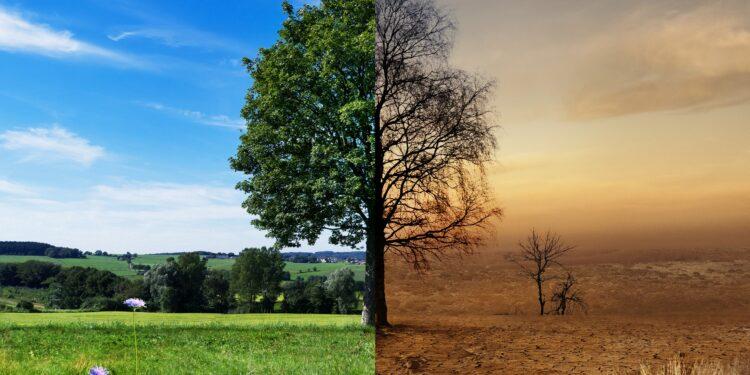 Bild eines Baums vor und nach Klimawandel.