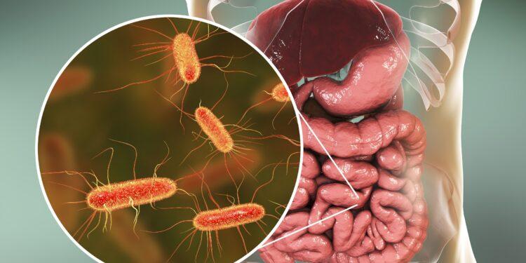 Ein Schaubild über den Darm und den darin lebenden Bakterien.