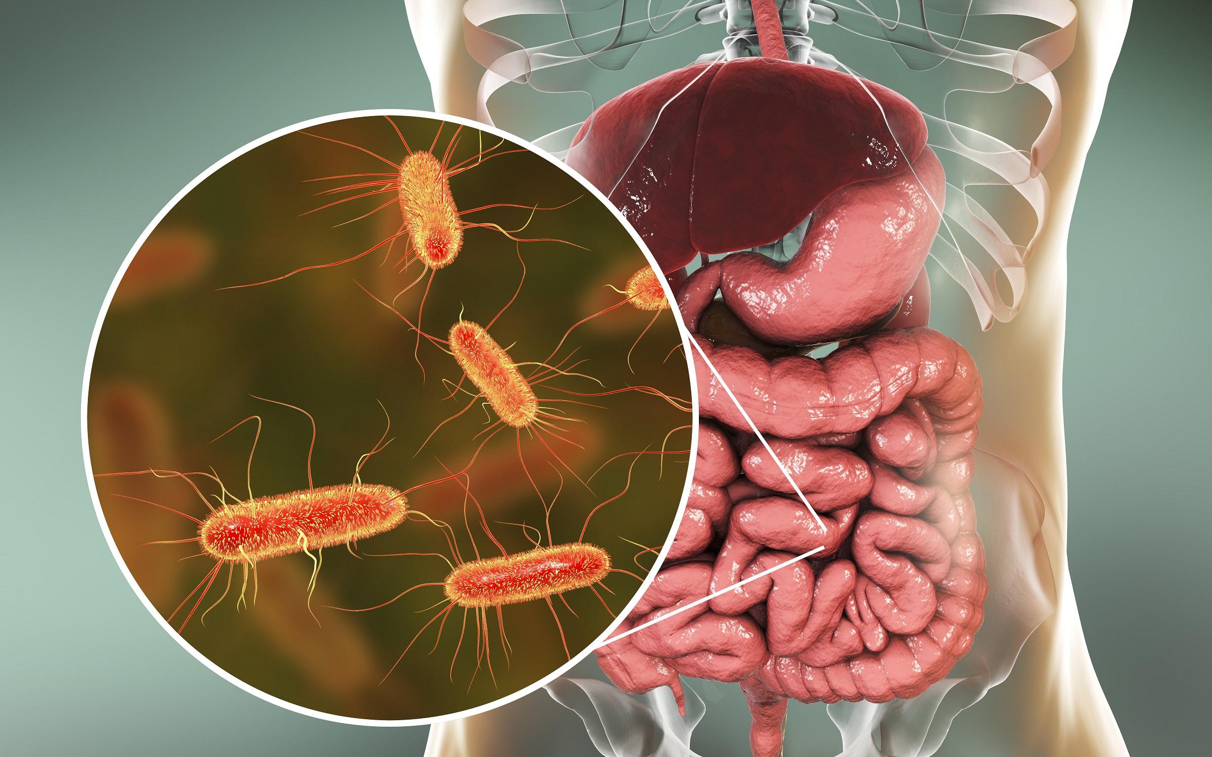 antibiotika-neuer-ansatz-soll-darmflora-bei-einnahme-sch-tzen