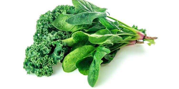 Ein Bündel mit Spinat- und Grünkohlblättern vor einem weißen Hintergrund.