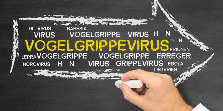 Tafel, auf die mit Kreide Vogelgrippevirus geschrieben wird