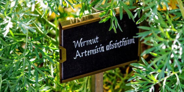 Wermut in einem Garten mit Kreidetafelschild