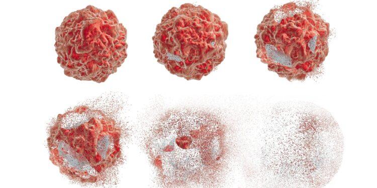 Krebszellen in sechs Stadien von überall in der Zelle bis zum Zerfall.