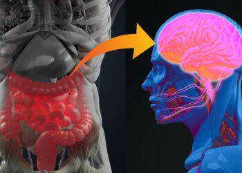 Ein Schaubild, auf dem eine Verbindung zwischen Darm und Gehirn dargestellt wird.