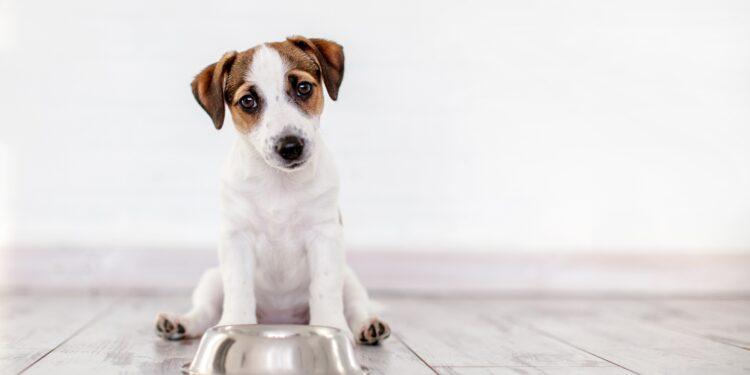 Ein Hund sitzt vor einem leeren Fressnapf.