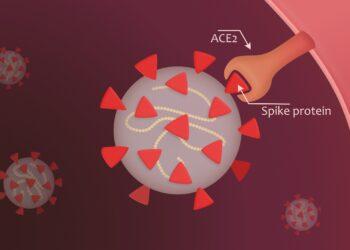 Eine grafische Darstellung eines Coronavirus, das über Spike-Proteine an den ACE-2-Rezeptor bindet.