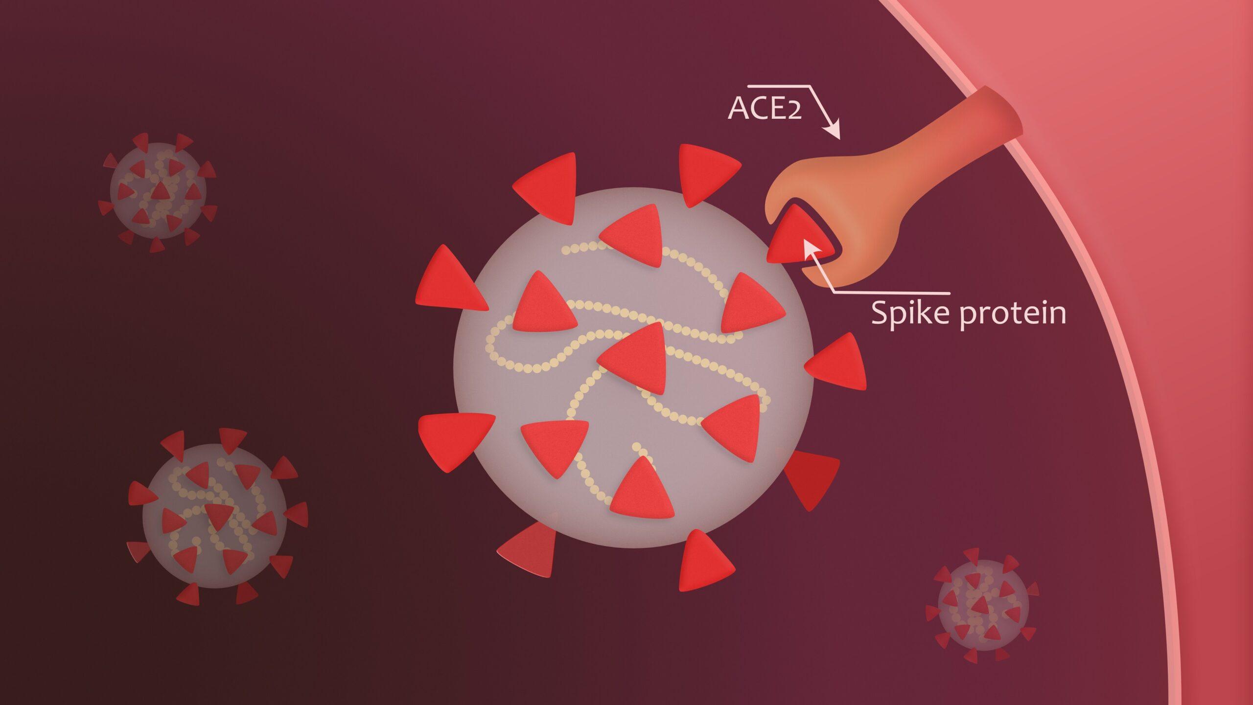 Coronavirus-bertragung-durch-dreieckige-Spikes-erfolgreicher