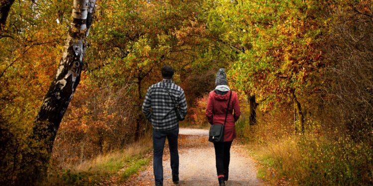 Menschen gehen im Wald spazieren.