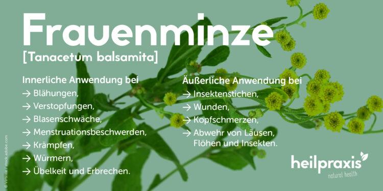 Ein Schaubild über die Anwendungsgebiete der Frauenminze als Heilpflanze.