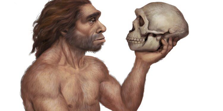 Illustration eines Neandertalers, der den Schädel eines Neandertalers betrachtet