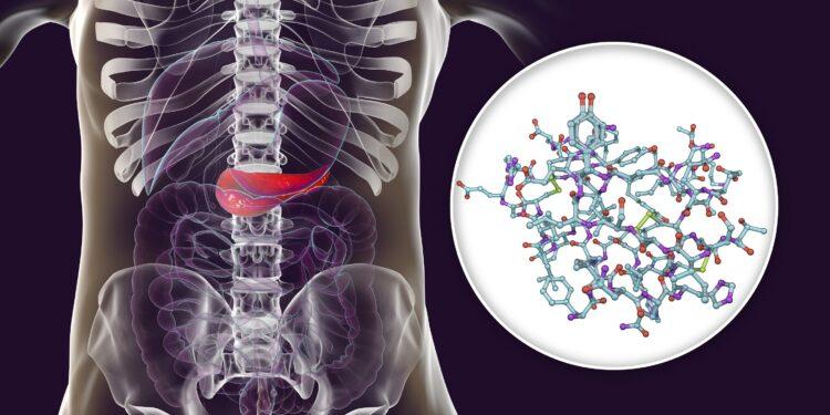 Schaubild zeigt die Position der Bauchspeicheldrüse im menschlichen Körper.
