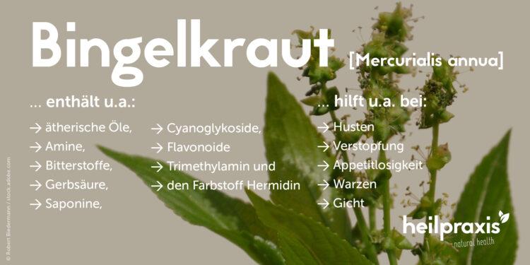 Inhaltsstoffe und Anwendungsgebiete vom Bingelkraut