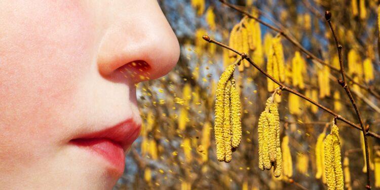 Weibliche Nase vor einem Haselnussbaum