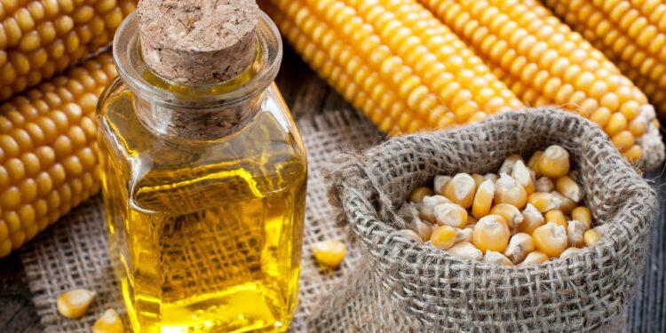Maiskolben, Maiskörner in einem kleinen Jutebeutel und Maisöl in einer Glasflasche