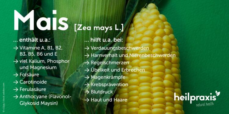 Übersicht der Inhaltsstoffe und Anwendungsgebiete von Mais