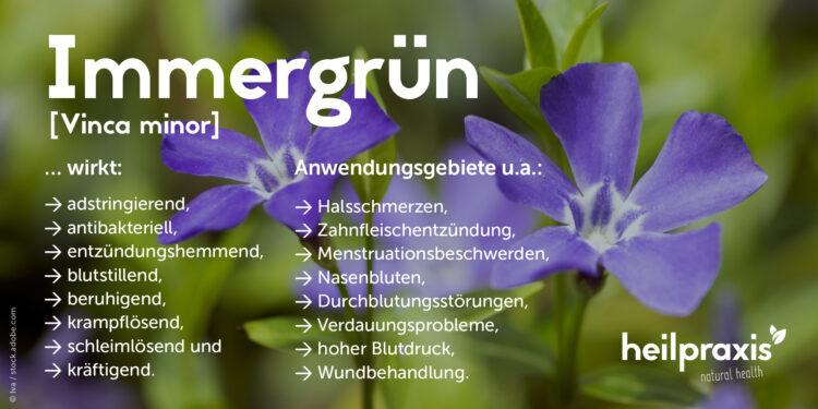 Eine Übersicht über die Wirkungsweise der Pflanze Vinca minor (Immergrün).