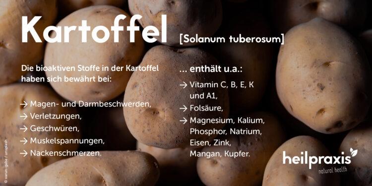 Eine Übersicht über die Anwendung der Kartoffel als Heilpflanze.