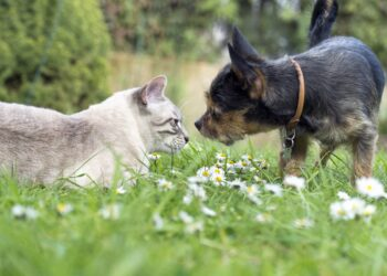 Katze und Hund beschnuppern sich