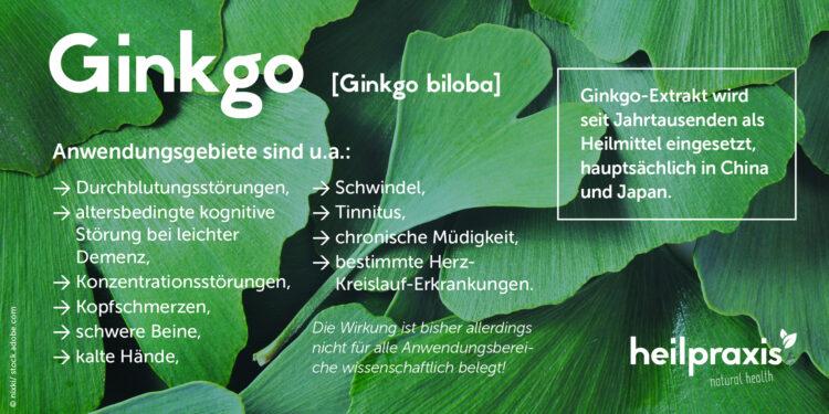 Übersichtsgrafik Ginkgo biloba mit den Hauptanwendungsgebieten
