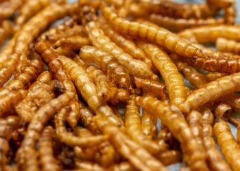 Gefriergetrocknete Mehlwürmer