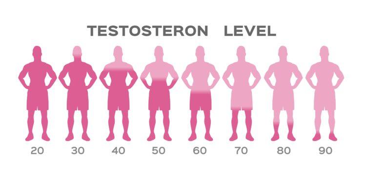 Schaubild: Testosteronspiegel in Abhängigkeit vom Alter.