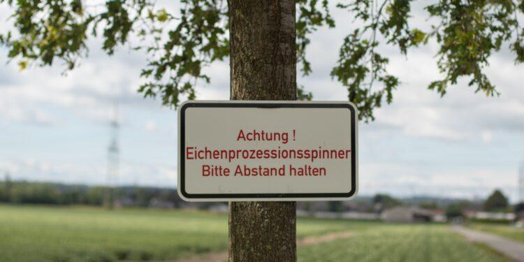 Schild mit Warnung vor Eichenprozessionsspinnern