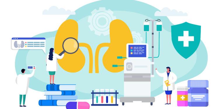 Comichafte Darstellung von Gesundheitspersonal, das ein übergroßes Nierenpaar untersucht.
