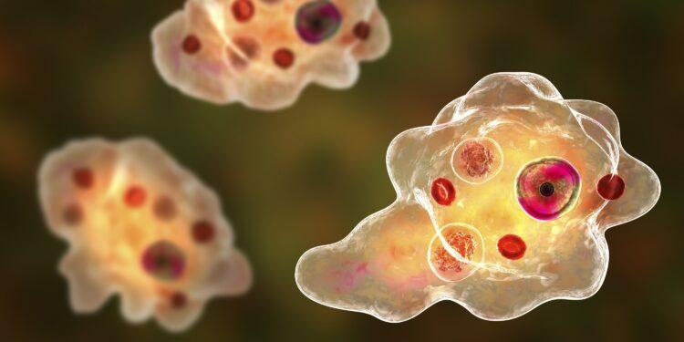 Graphic representation of the amoeba Entamoeba gingivalis.
