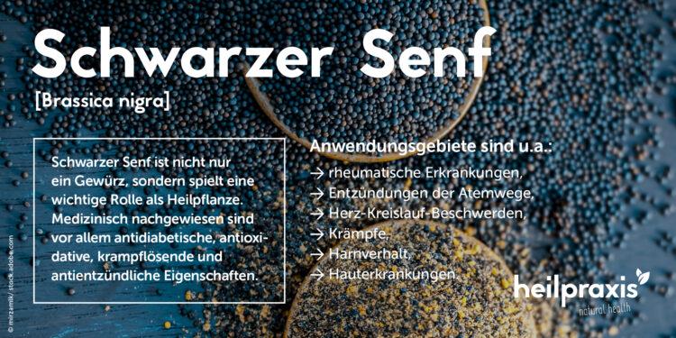 Wichtigste Wirkweisen und Anwendungsgebiete von Schwarzem Senf