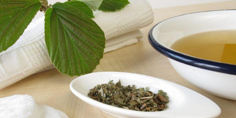 Zubernuss Blätter zerkleinert für Heilanwendung