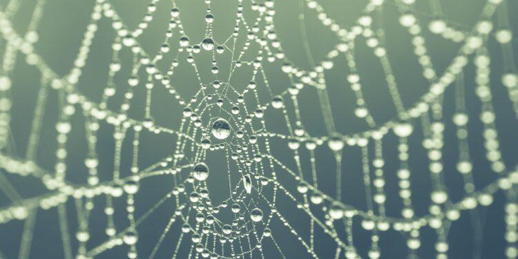 Foto de una telaraña con gotas de lluvia colgando.