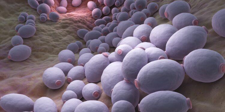 Grafische Darstellung von Darmpilzen vom Typ Candida albicans.