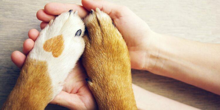 Hund und Besitzer halten Händchen.