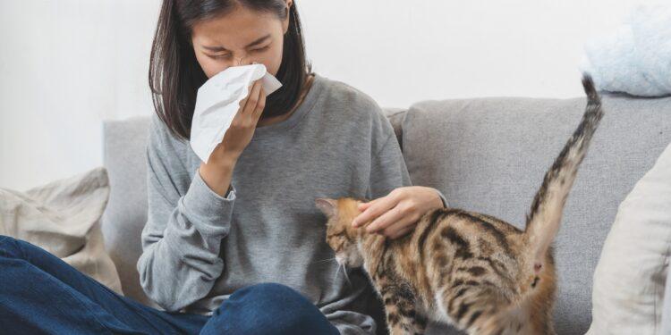 Frau mit Taschentuch vor dem Gesicht sitzt auf dem Sofa und streichelt eine Katze