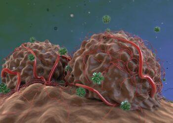 Grafik: Antikörper greifen stark durchblutete Tumore an.