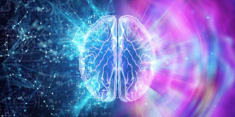 3D-Darstellung des Gehirns