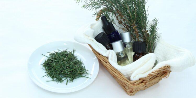 Teebaumzweige in Korb mit Teebaumöl-Fläschchen und Teebaumblätter auf Teller