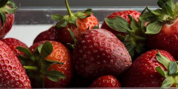 Eine schimmlige Erdbeere liegt zwischen normalen Erdbeeren.
