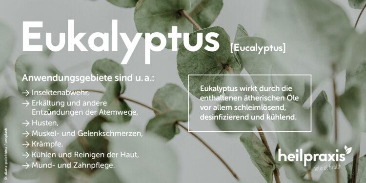 Übersicht zu den wichtigsten Anwendungsgebieten von Eukalyptus