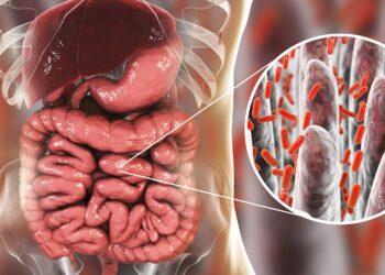 Schaubild über Darmbakterien.